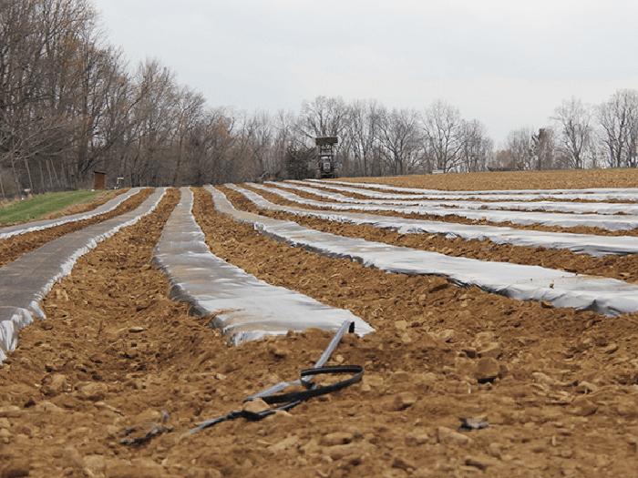 Màng phủ nông nghiệp là gì?